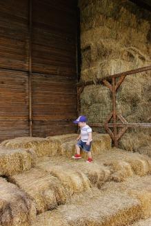 A Day at Wheeler Farm | Little Bird Nest | 17 of 20