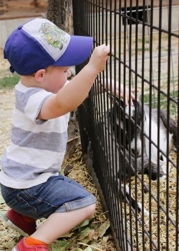 A Day at Wheeler Farm | Little Bird Nest | 13 of 20