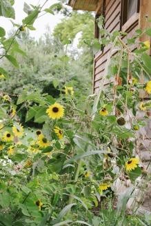A Day at Wheeler Farm | Little Bird Nest | 3 of 20